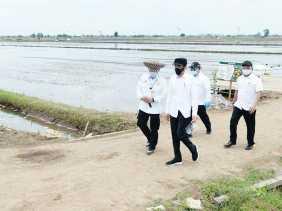 Presiden Jokowi ke Kalteng Mengecek Food Estate
