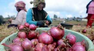 Disdagtri: Harga Minyak Goreng Curah dan Bawang Merah Rogol Sedikit Naik