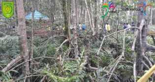 Pohon Bakau di Pulau Cawan Semakin Besar