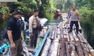 Polisi Selidiki Dugaan Tindak Pidana Ilegal Logging di Kampung Rawa Mekar Jaya