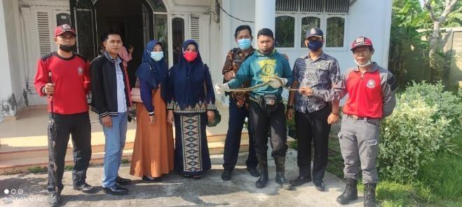 Evakuasi Ular Sanca, Petugas DPKP Inhil Terkena Satu Gigitan