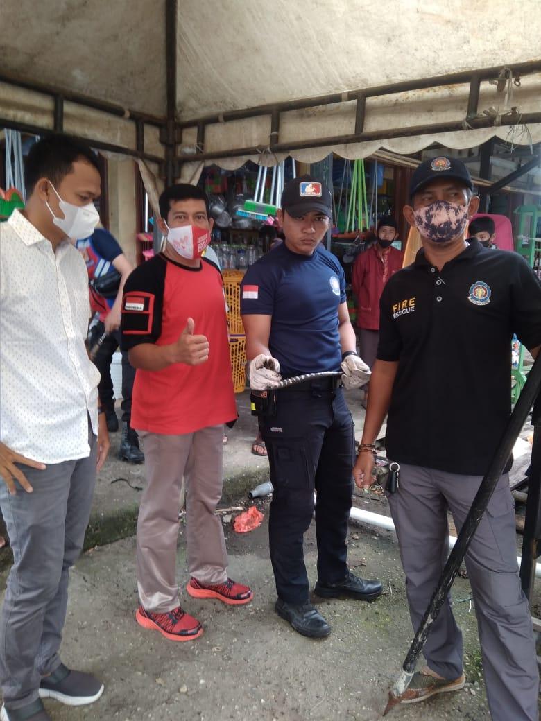 Petugas DPKP Inhil Evakuasi Ular Berkepala Dua di Pasar Kayu Jati Tembilahan Hulu
